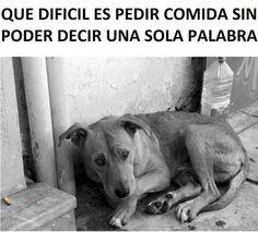 No al maltrato animal...