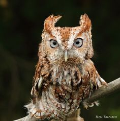 owl stare by Hem Tripathi on 500px