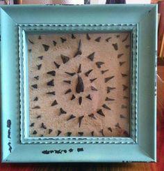 Shark teeth displayed in shadow box
