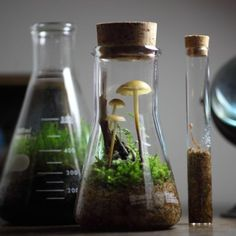 Discovered by ivy. Find images and videos about science, mushroom and fungi on We Heart It - the app to get lost in what you love. Mini Terrarium, Terrarium Plants, Moss Garden, Water Garden, Indoor Garden, Indoor Plants, Bonsai, Paludarium, Vivarium