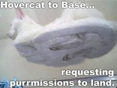 Base to HoverCat......you are free to land on runway 3. Repeat, Runway 3 is open in 3, 2,1! Crazy Cat Lady, Crazy Cats, Cats On Glass Tables, Hover Cat, Funny Cute, Hilarious, Super Funny, Funny Animals, Cute Animals