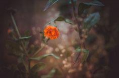 Katrin — DBurn.ru - Фотосоциальная сеть