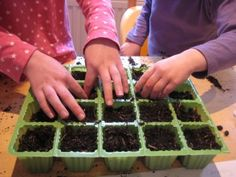 What do seeds need to grow: just water? just soil? soil and water? what about sunlight?