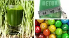 Trawa pszeniczna jest znaną od tysięcy lat rośliną o nieocenionych właściwościach zdrowotnych, która sprawdza się jako lek i żywność. A to w ...