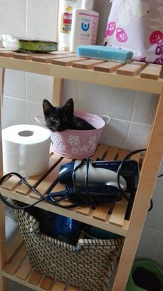 ...... Crazy Cat Lady, Crazy Cats, Grey Kitten, Kittens And Puppies, Cat Names, Cat Love, Animal Photography, Animal Pictures, Fur Babies