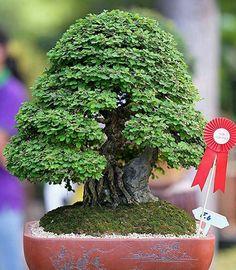 Plantas Bonsai, Bonsai Styles, Bonsai Art, Ikebana, Cactus Plants, Indoor Plants, Diy Design, Bouquet, Fairies Garden