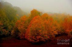 Autumn Bonfire Photograph by Terri Gostola in  FineArt America-