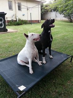 sharing is caring with a coolaroo pet bed these two are just too cute