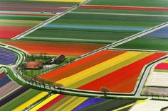 Amsterdam, Tulip fields, Netherlands