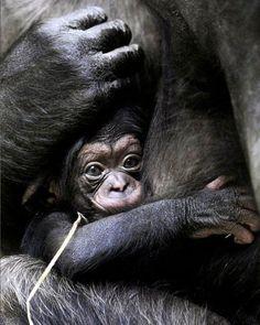 WarNet.ws: Они родились в зоопарке (40 фото)
