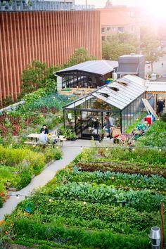 Garden Cafe, Rooftop Garden, Garden Cottage, Urban Agriculture, Urban Farming, Beaux Arts Lyon, Greenhouse Cafe, Vegetable Garden Design, Garden Architecture