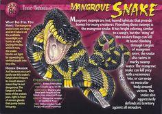 Mangrove Snake front