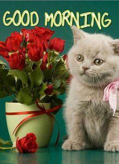 Good Morning Cat, Good Morning Flowers Gif, Good Morning Sister, Good Morning Arabic, Good Morning Picture, Good Morning Sunshine, Morning Pictures, Morning Pics, Good Morning Messages Friends