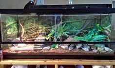 BTS enclosure gallery - Page 2 - BLUE TONGUE SKINKS