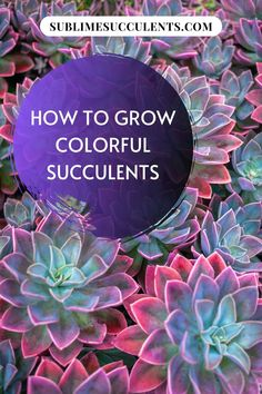 How to Grow Colorful Succulents Have ever looked at the gorgeous and vibrantly colored succulents on Succulents Online, Types Of Succulents, Colorful Succulents, Growing Succulents, Colorful Garden, Cacti And Succulents, Cactus Plants, Air Plants, Potted Plants