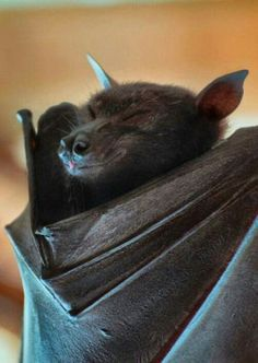 Simply adorable BaT
