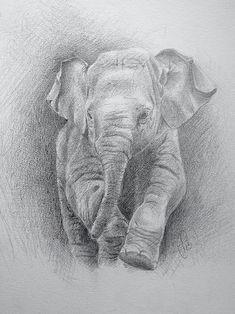 Elephanteau aux crayons sur papier 24x32cm : Dessins par sebastien-sorolla