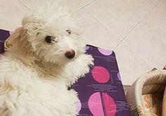 Cinquew News: I vantaggi di avere un animale domestico per i mal...