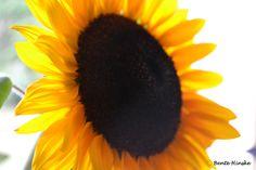Für dunkle Stunden wünsche ich euch/dir die Eigenschaften der Sonnenblume, die ihr Gesicht der Sonne zuwendet, damit alle Schatten hinter sie fallen.
