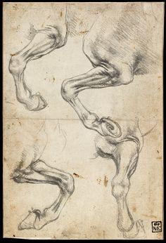 Study of horses by Leonardo