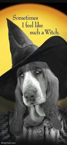 5 ITEM MONEY FAKE J Basset Hound Dog Dollar  Bills  Novelty Collectible