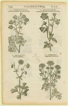 Woodcut plants