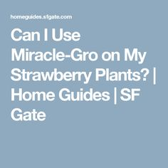 Can I Use Miracle-Gro on My Strawberry Plants? | Home Guides | SF Gate