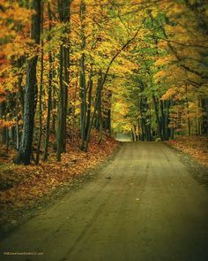 Fall Trails Near Dryden Michigan | A1 Pictures