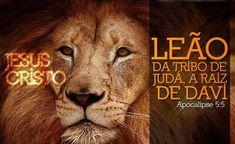 leão da tribo de judá  APc 5:5