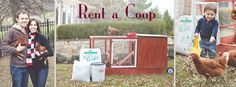 Rent a Chicken Coop and Egg Laying Hens in Maryland, Virginia, Washington DC, Educational Animals, Chicken, chickens, coop, coops, children,...