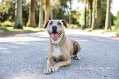 http://www.becbrindleyphotography.com    Pet Photography