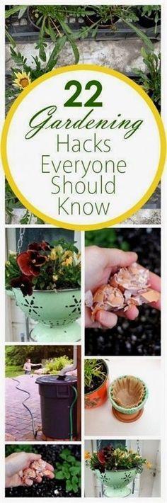 Gardening, home garden, garden hacks, garden tips and tricks, growing plants, plants, vegetable gardening, planting fruit, flower garden, outdoor living #FlowerGarden