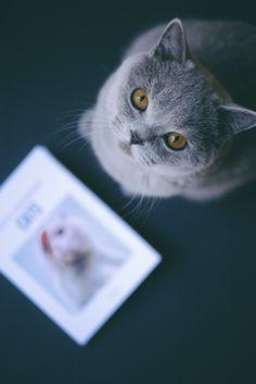 Le livre sur les plus chats d'instagram - Une idée cadeau pas gnangnan ;-) - Insta grammaire CATS | Photo Vanessa Pouzet