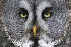 Супер-совы « FotoRelax
