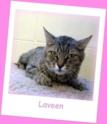 Laveen is an adoptable Tabby - Brown Cat in Glendale, AZ. DOB: 6/2/10 Spayed Female Breed: DSH – Brown Tabby Weight: 8.02 lbs. Hi, my name is Laveen! I was found living, with my babies, in an elevator...
