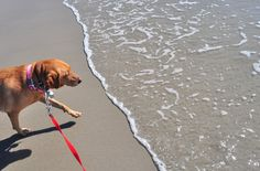 Many public beaches and lakes require a leash no longer than six feet. Nylon leashes are fast-drying!