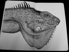iguana sketchbook drawing by Tim Jeffs https://www.etsy.com/shop/TimJeffsArt