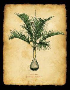 palm tree art - Google Search