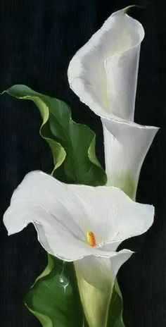 Wonderful Absolutely Free Calla Lily painting Thoughts Calla lilies will be the essential bridal bouquet flower. The actual lamps of this Africa bloom usua Lys Calla, Calla Lillies, Calla Lily Flowers, Lily Painting, China Painting, Art Floral, Watercolor Flowers, Watercolor Paintings, Watercolour