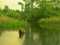 Fine art landscape and nature photography, photos and pictures.....