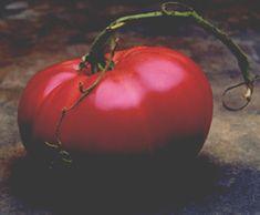 tomatofest.com  Marianna's Peace