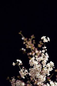 Black wallpaper for Android Deep Wallpaper, Flowery Wallpaper, Iphone Background Wallpaper, Cellphone Wallpaper, Beautiful Flowers Wallpapers, Cute Wallpapers, Floral Wallpapers, Desenio Posters, Rose Foto