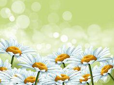 Daisies Art - Happy spring  by Veronica Minozzi
