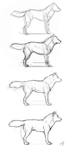 Guides to Drawing Wolves - Basic Wolf Step by Step by whisperpntr.devia… on - Guides to Drawing Wolves – Basic Wolf Step by Step by whisperpntr.devia… on - Animal Sketches, Animal Drawings, Drawing Sketches, Drawing Animals, Drawing Ideas, Drawings Of Wolves, Drawing Guide, Drawing Drawing, Sketching