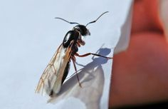 7 best a3 superior pest control images bed bugs treatment a3 rh pinterest com