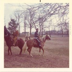 rare pictures of elvis at graceland stable: Rising Sun and other Horses at Graceland