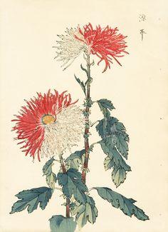 from Art of the Japanese Chrysanthemum Vintage Botanical Prints, Antique Prints, Botanical Art, Japanese Chrysanthemum, Chrysanthemum Flower, Chrysanthemum Drawing, Japan Painting, Japan Art, Chinese Painting