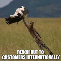 Home - E-Bizda International Business Directory Online Marketing, Digital Marketing, Search Engine Optimization, Animals, Online Business, Seo, Campaign, Animais, Animales