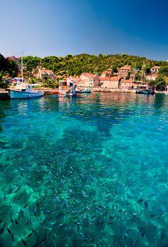 A mass of fish around Elafits Islands near Dubrovnik in de Adriatc Coast in Croatia