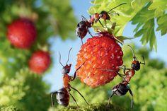 Dá sa ekologicky zbaviť mravcov v záhrade? Ako?   Záhrada.sk
